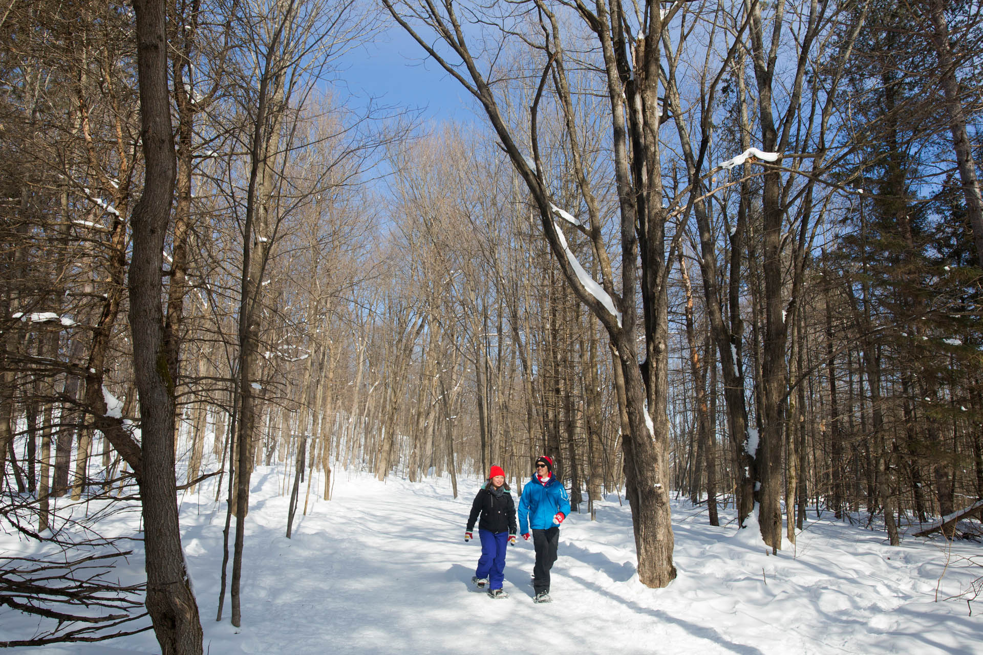 Couple snowshoeing in the Gatineau Park